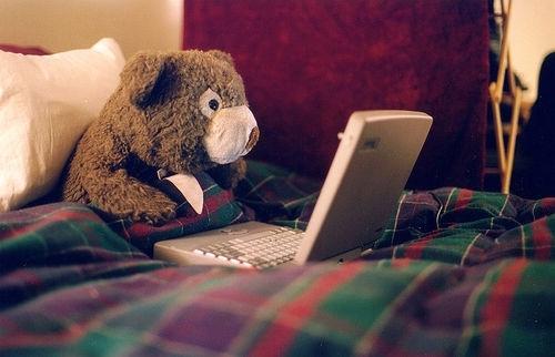 bear and computer